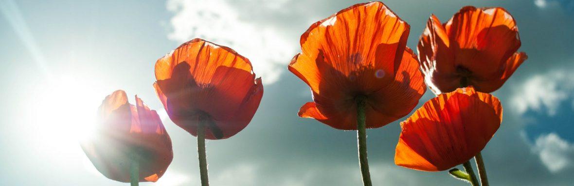 Le Dix Vins Blog littéraire poétique et cultivant